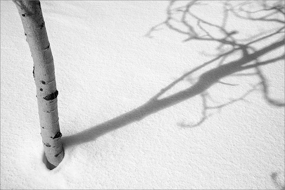 Tree-Shadows_002_030518