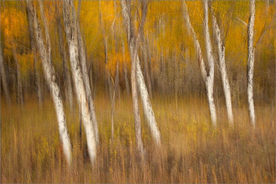 Blurred Trees #3