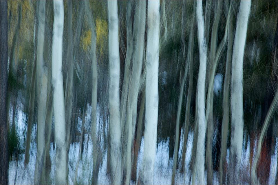 Blurred Trees #2