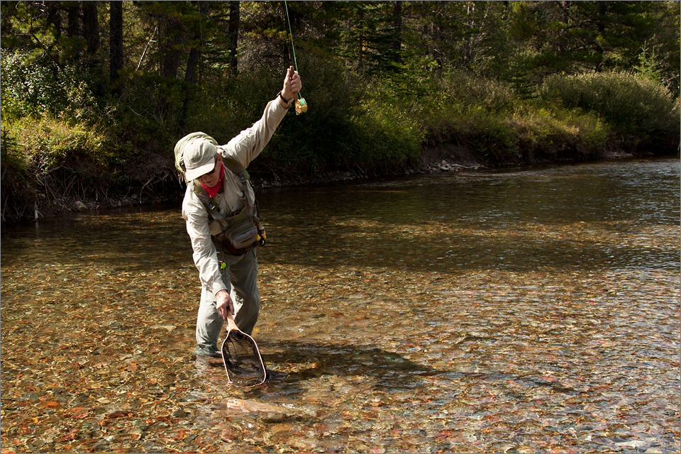 Landing a Cutthroat Trout
