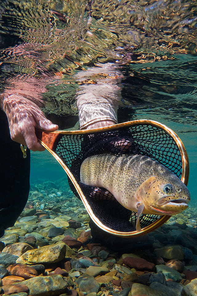 Cutthroat Trout Cover