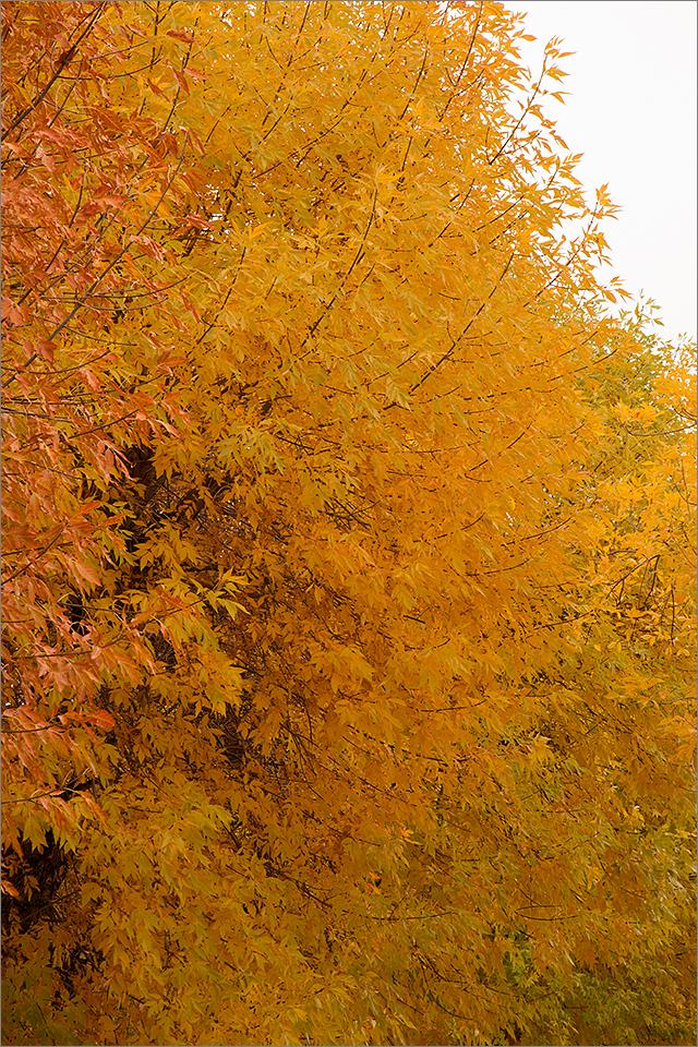 Autumn Leaves #4