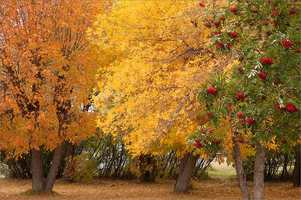 Autumn Leaves #5