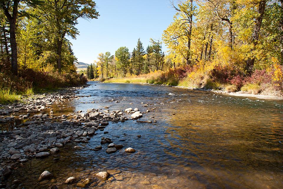 Crowsnest River #5