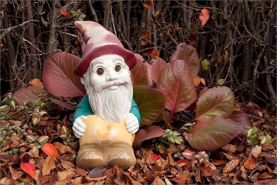 Backyard Gnome