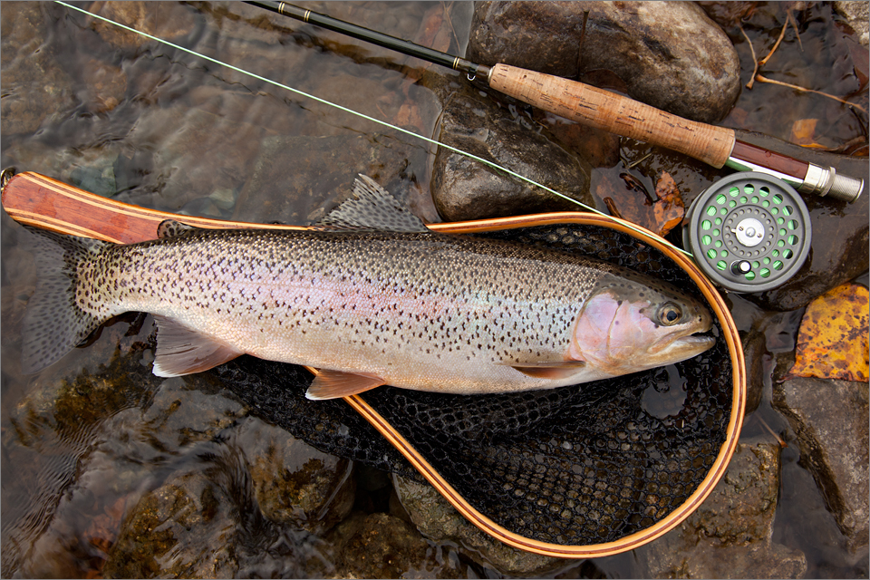 rainbow-trout_002_103016