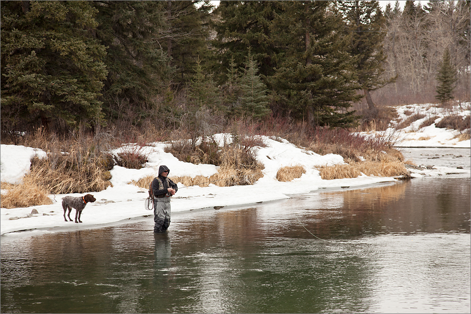 Fly-fishing on the Crowsnest River