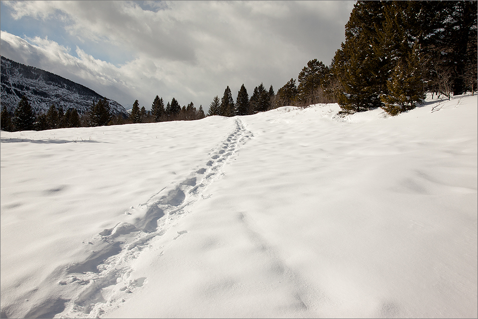 Snowshoe trail crossing an open meadow