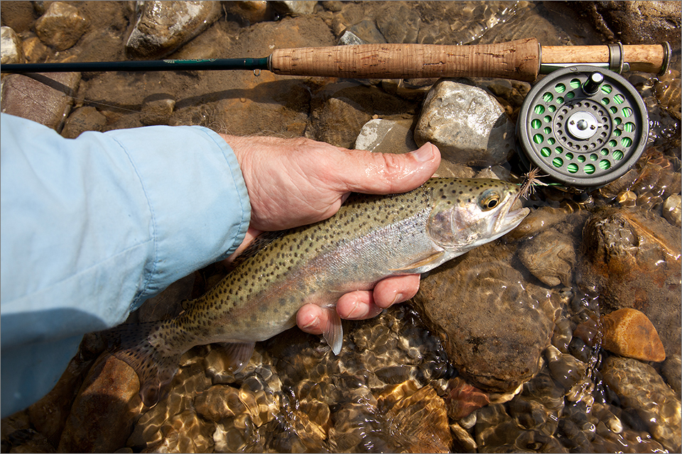 10-inch rainbow trout