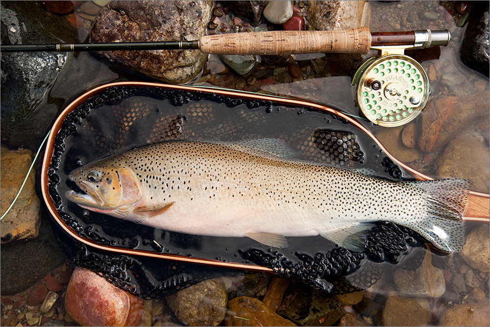 Cutthroat caught on a Parachute Adams dry fly