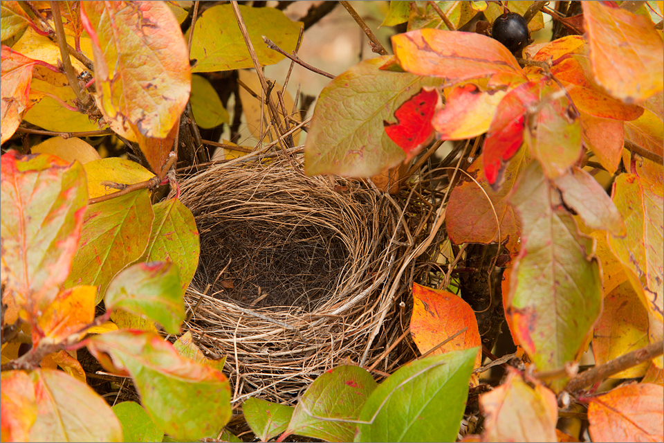 Backyard bird nest