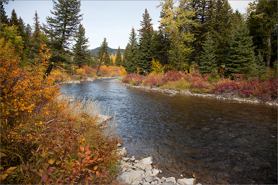 Crowsnest River near Hillcrest